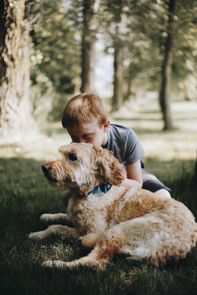 Kutyák minden mennyiségben