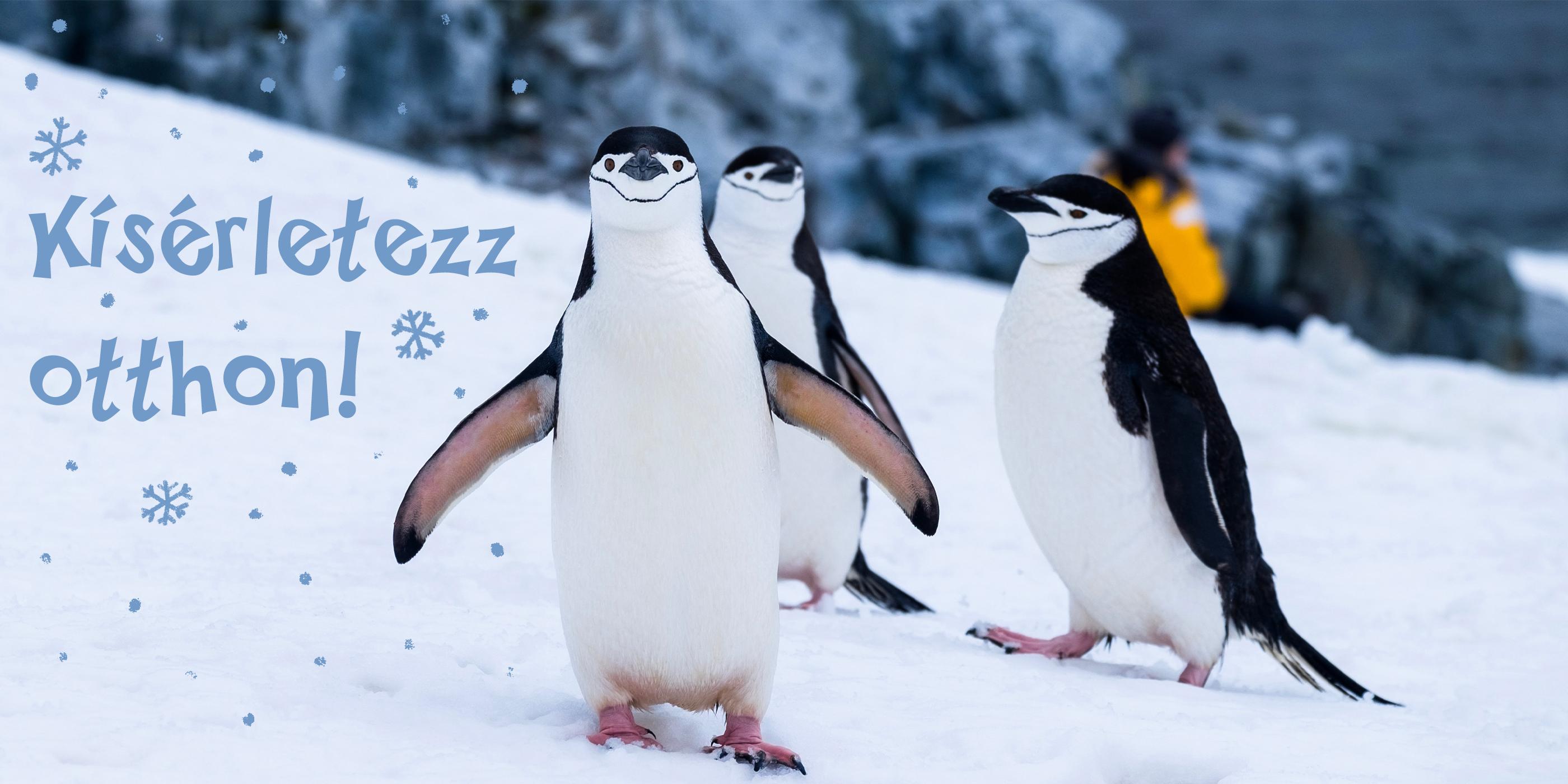 pingvinek tudják