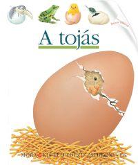 A tojás